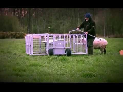 is livestock for standing and sale feeds free feeder carry sheep category adjustable d from a lid equipment lambs creep products to feeders has s handles easy legs