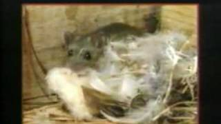 What is Hantavirus Disease? 1994 CDC
