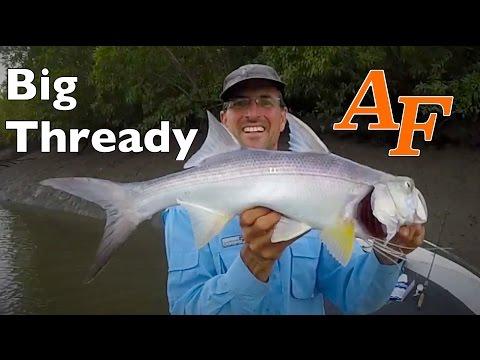 Thread Fin Salmon, Barramundi And Baby Crocodiles Saltwater Andysfishing Fishing Video EP.222