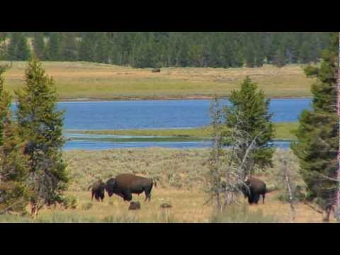 Yellowstone National Park | Part 3: Fishing Bridge to Canyon Village