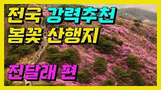 진달래 봄산행지 추천 - 영취산, 비슬산, 고려산, 천…