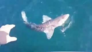 Рыбаки поймали акулу во Владивостоке