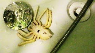 Jadowite Pająki w Domu Pod Prysznicem w Łazience - Dzikie Zwierzęta w Mieszkaniu PL