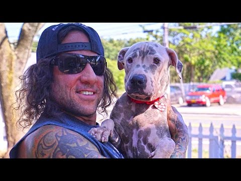 Pitbulls & Muscles: MUTANT visits New York Bully Crew Pit Bull Rescue
