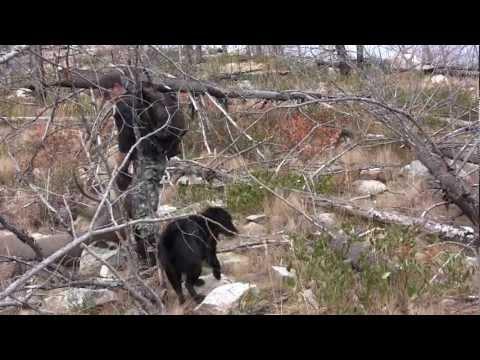 BC Mule Deer- 2011 Hunt.mpg