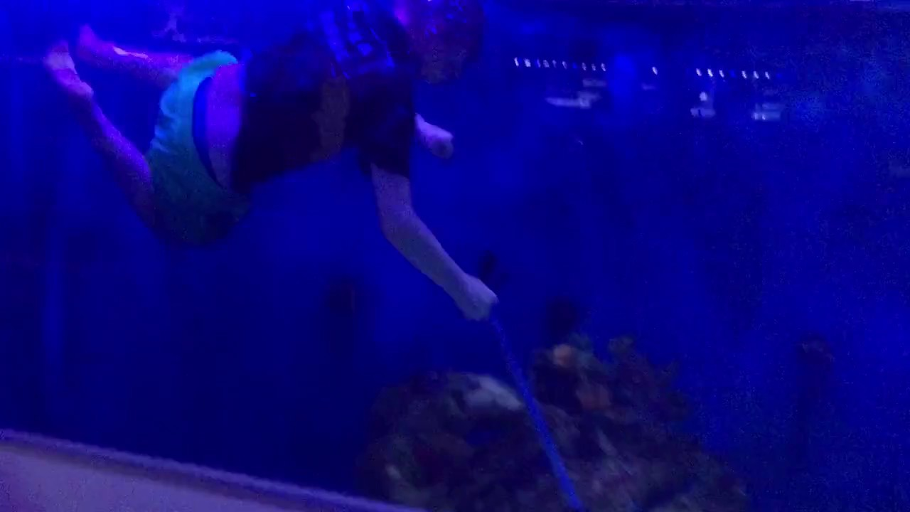 Kid jumps in shark tank!