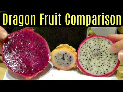 Yellow, Red and White Dragonfruit Comparison - Weird Fruit Explorer Ep. 46