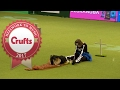 Freestyle Heelwork To Music Competition Part 3/3 | Crufts 2017
