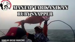TARIKAN IKAN RUBY BIKIN BETAH GA MAU PULANG   #20