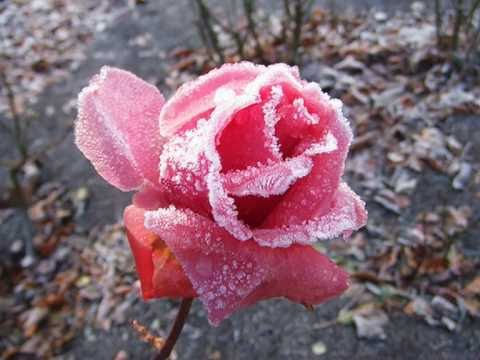 James Last - When The Snow Is On The Roses