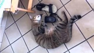 My cat Busbus has a shoe fetish