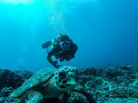 THE BALI ADVENTURE - Diving with sea turtles and sharks