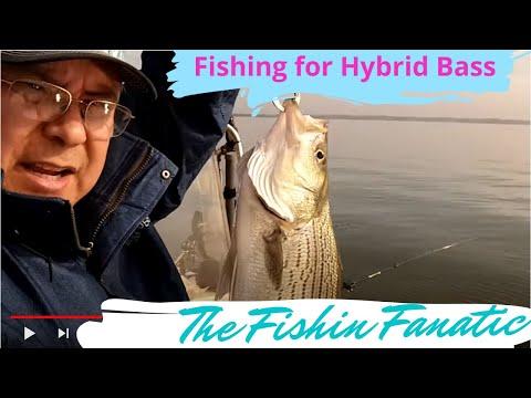 Lake conroe bass fishing doovi for Lake conroe fishing