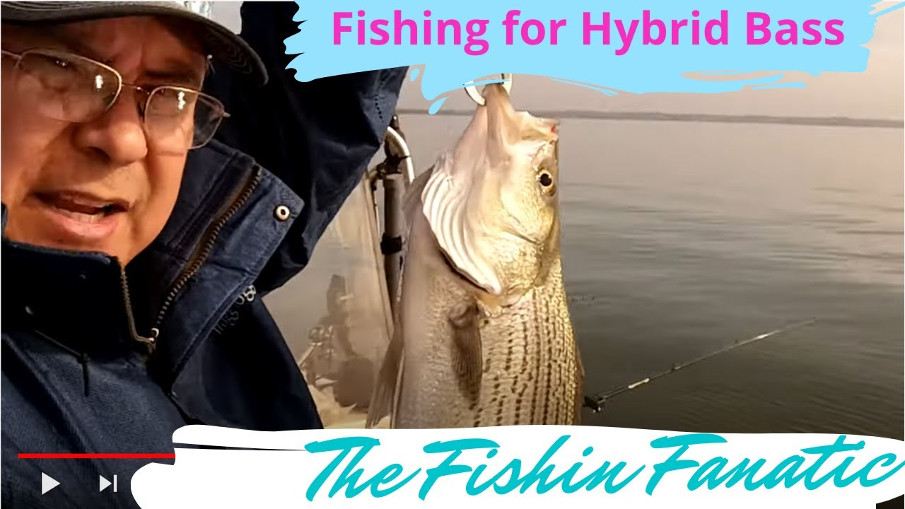 Fishing for hybrid bass lake conroe youtube for Lake conroe bass fishing