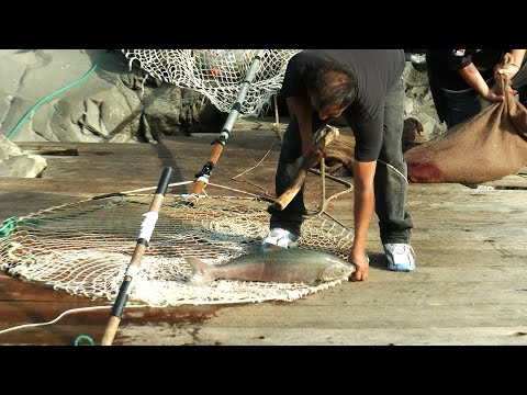 Traditional Dip Net Fishing  The Yakama Nation Tribe