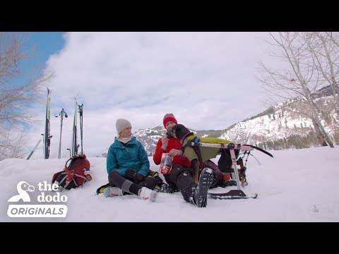 Rescue Dog And Her Family Try Skiing For The Very First Time l The Dodo Destination: Firsts