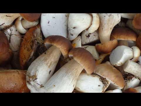 Калорийность грибов - таблица калорийности