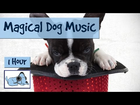 Try our MAGICAL Dog Music Today! High Freq Relaxing Music! Watch them Calm Down Within Minutes!