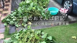 ココ姫のおてんば日記 近所の農家さんから枝豆を分けて頂きました(^^) ...