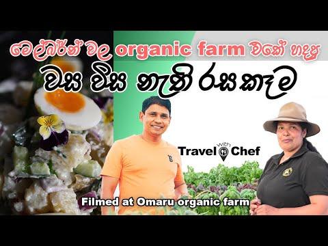 මෙල්බන්වල වස විස නැති ලාංකික ගොවිපළේ හදපු ගුණ සැලඩ් එක. Salad from Organic farm produce