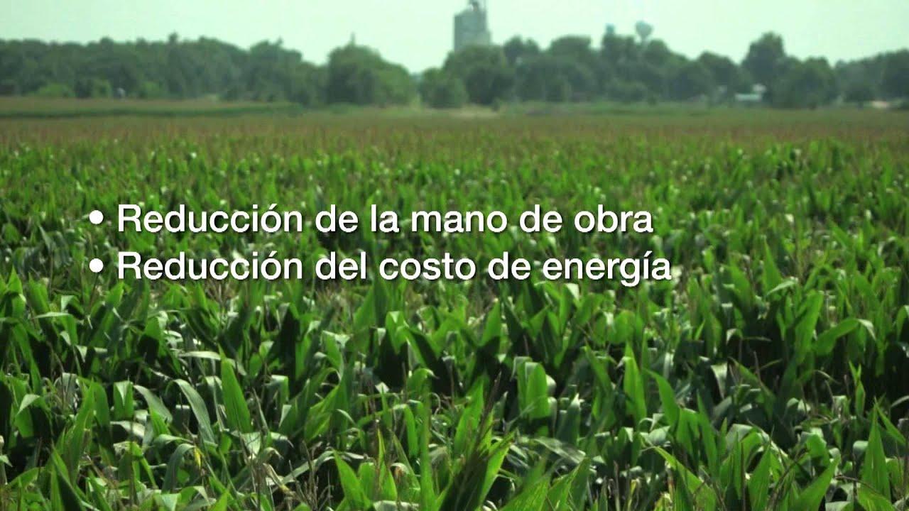 Los productores de ma z implementan el riego por goteo - Tuberias de riego por goteo ...