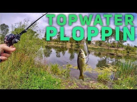 Topwater Ploppin -  Sacramento, CA Bass Fishing