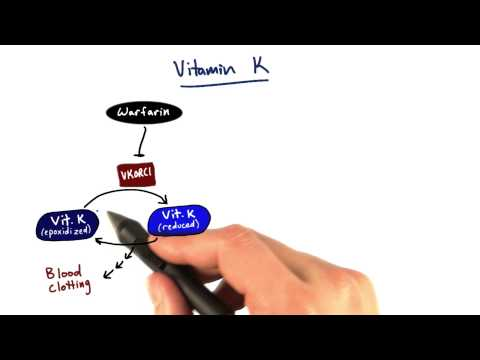 Vitamin K - Tales from the Genome