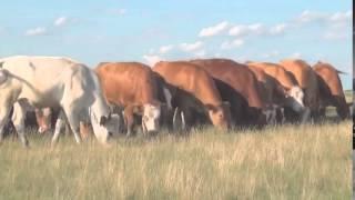 Природа мира: Красивейшие места Европы - документальный - русский фильм смотреть онлайн 2012