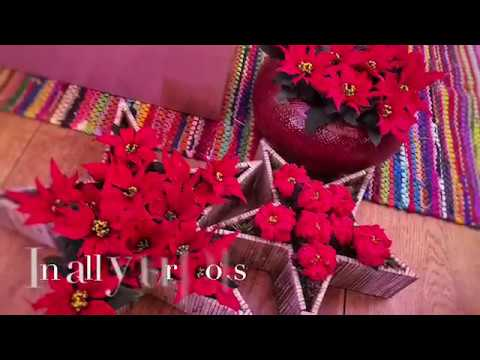 10 Wonderful Christmas Decorations with Poinsettias -SPONSORED