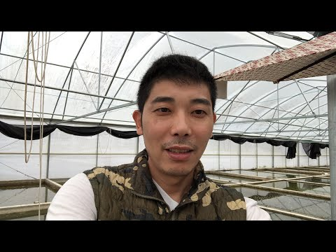 Live Broadcast For Goldfish Fry Selection And Water Preparation - Zhao's Fancies