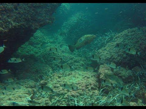 Fish ID Quiz - Mediterranean Marine Life Recognition