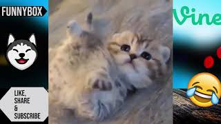 😹 Hilarious Funny Cats & Dogs 🐶 TRY NOT TO LAUGH CHALLENGE😂 funnybox vine compilation 2019🤣