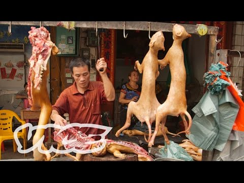 Dining On Dogs In China: Dog Days Of Yulin (Part 1/2)