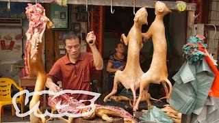dining on dogs in yulin vice reports part 1 2