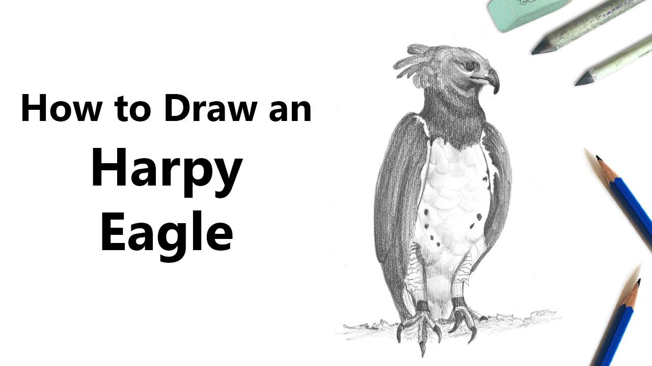 kisekae how to make a harpy