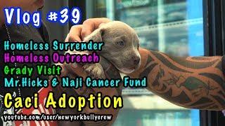 New York Bully Crew | VLOG #39