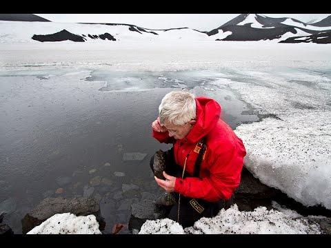 UNT researcher studies Antarctic insect
