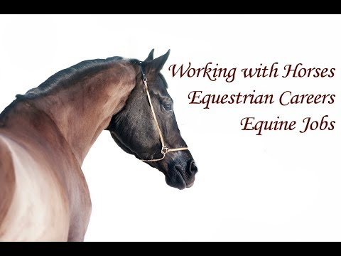 Working With Horses - Equestrian Jobs, Equine Careers