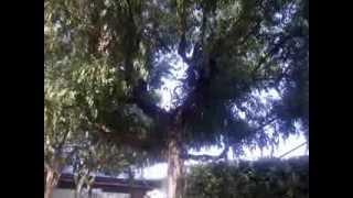 Gli Eucalipti all'Eurcamping di Roseto degli Abruzzi