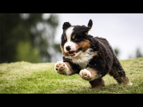 Youtube Cute Dogs And Puppies
