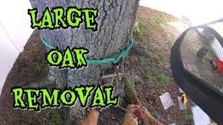 #6(Raw) That one large oak job that was a blast. removal . Negitive Rigging . SRT climbing/
