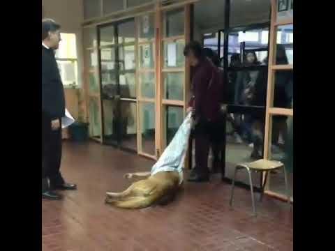 Maltrato animal colegio contardi de Punta Arenas