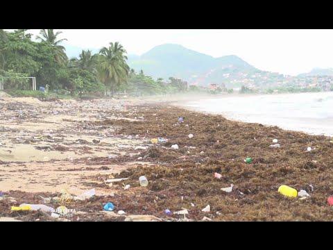 Sierra Leone: Morska trava 'guši' plaže ali i ekonomiju