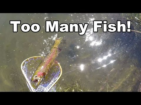 Shooting Fish In A Barrel! - Sometimes Easy Fishing Is Better Than Hard Fishing