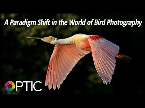 Optic 2016: A Paradigm Shift in the World of Bird Photography