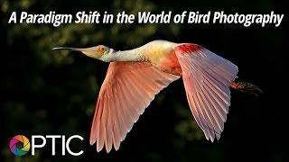 optic 2016 a paradigm shift in the world of bird photography