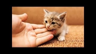 Cute Is Not Enough| Funny Cats and Kitten Videos Compilation (2018) Gatitos Bebes Video Recopilacion