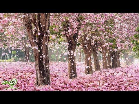 Beautiful Piano Music: Relaxing Music, Romantic Music, Sleep Music, Study Music ★137