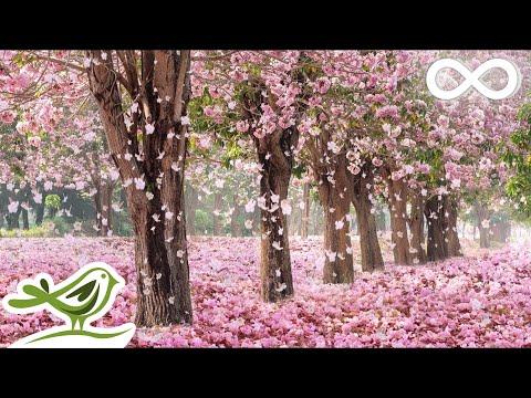 Beautiful Piano Music: Relaxing Music, Romantic Music, Sleep Music, Study Music ★137 - Поисковик музыки mp3real.ru
