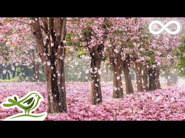 Beautiful Piano Music: Relaxing Music, Romantic Music, Sleep Music, Study Music ?137